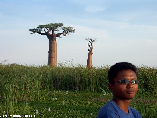 Benja with baobabs (Morondava) [baobabs0113]