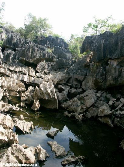 petite tsingy pond (Tsingy de Bemaraha)