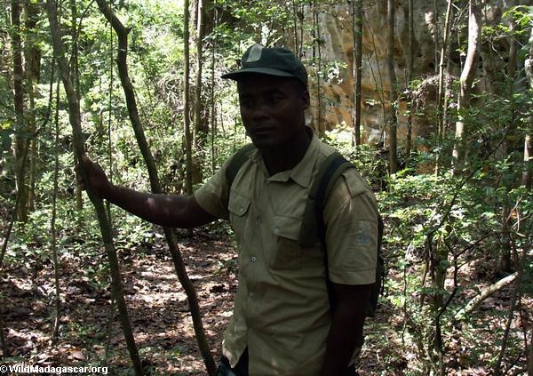 Tata in forest (Tsingy de Bemaraha)