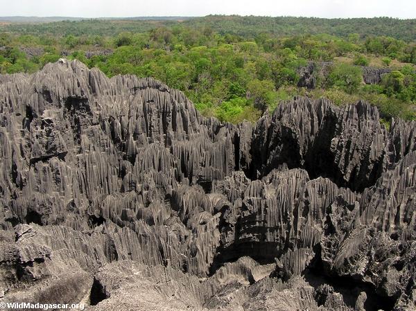 Limestone tsingy (Tsingy de Bemaraha) [tsingy_3]