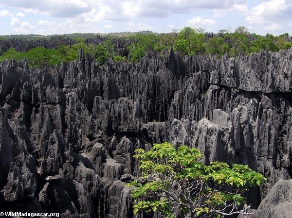 Limestone tsingy (Tsingy de Bemaraha) [tsingy_5]