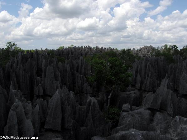 Limestone tsingy (Tsingy de Bemaraha)