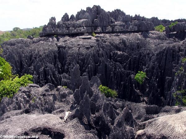 Limestone tsingy (Tsingy de Bemaraha) [tsingy_7]
