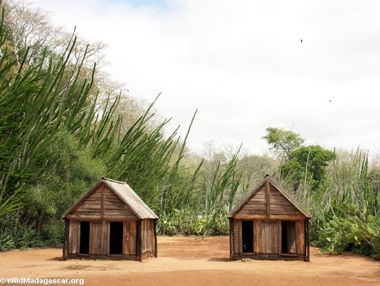 Sample huts of the Antandroy (Berenty)
