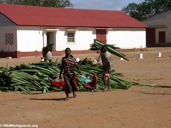 Andranobory plantation sisal workers (Berenty)