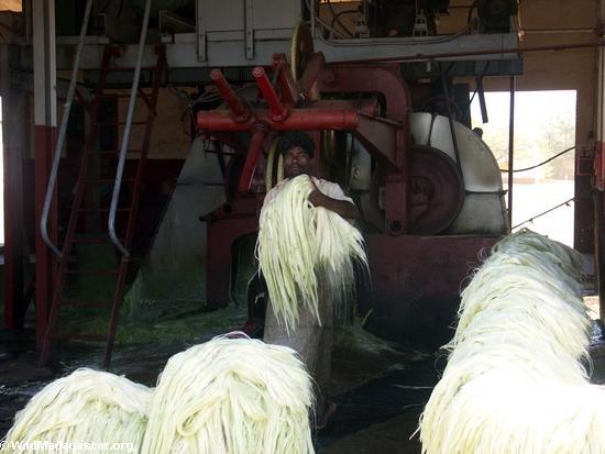 Andranobory sisal workers (Berenty) [sisal0159]