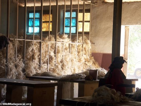 Dry sisal fiber at Andranobory (Berenty)