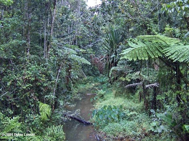 Perinet creek  (Perinet creek)