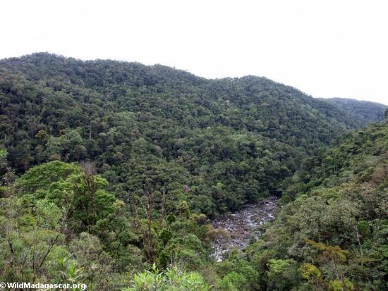 Ranomafana NP Rainforest