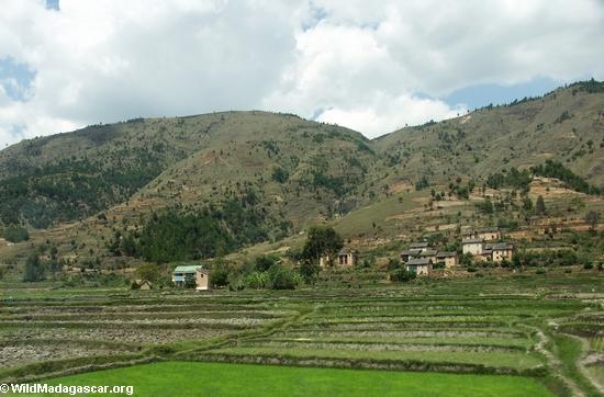Rice paddies in Madagascar (RN7)