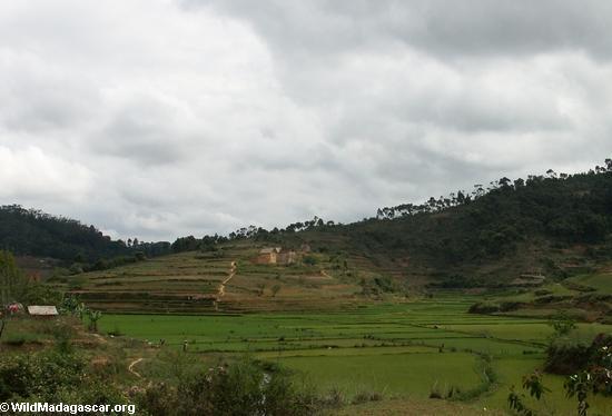 Reispaddys in den Hochländern von Madagaskar