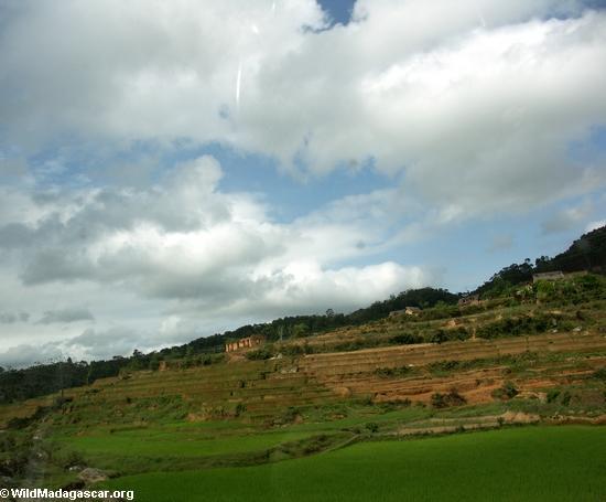 Rice paddies along RN7 in Madagascar (RN7)