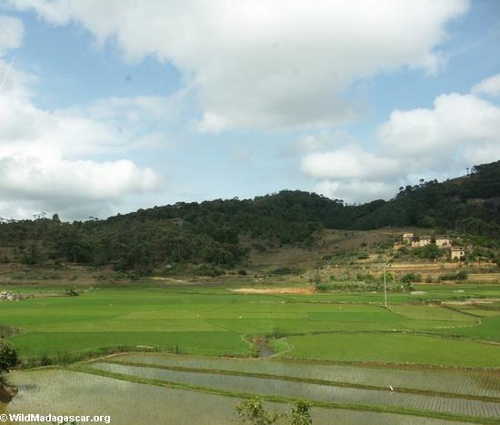 Rice paddies near Antananarivo; Madagascar (RN7)