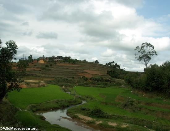 Rice paddies near Antananarivo (RN7)