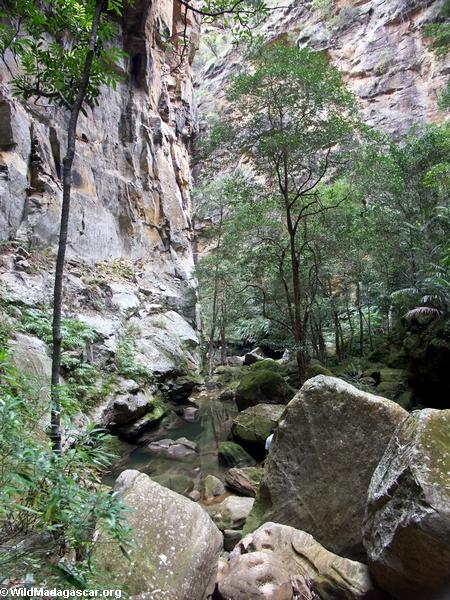 Canyon des rats in Isalo NP (Isalo) [canyon_des_rats0016]