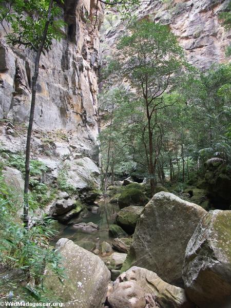 Canyon des rats in Isalo NP (Isalo) [canyon_des_rats0017]