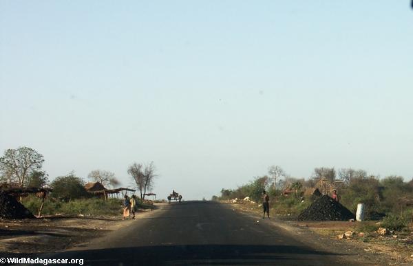 Zebu cart on road from Isalo (Isalo) [isalo-tulear0137]
