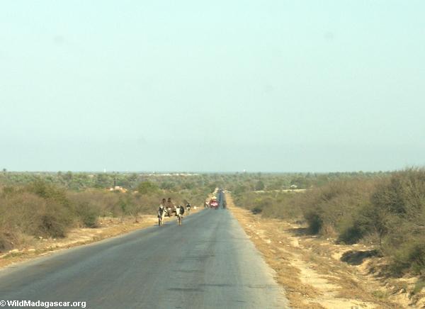 Zebu cart on road from Isalo (Isalo) [isalo-tulear0144]