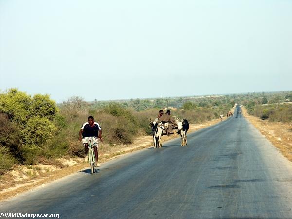 Zebu cart on road from Isalo (Isalo) [isalo-tulear0147]