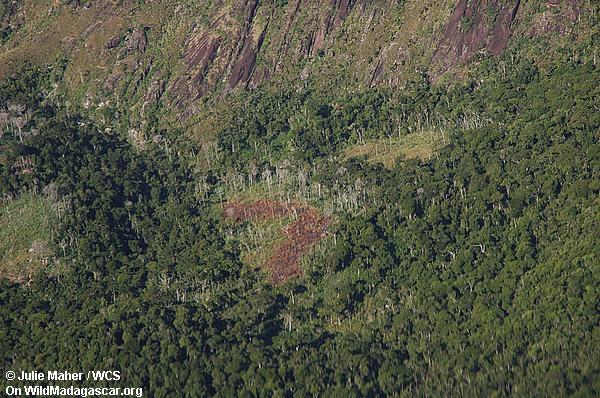 Tavy Abholzung
