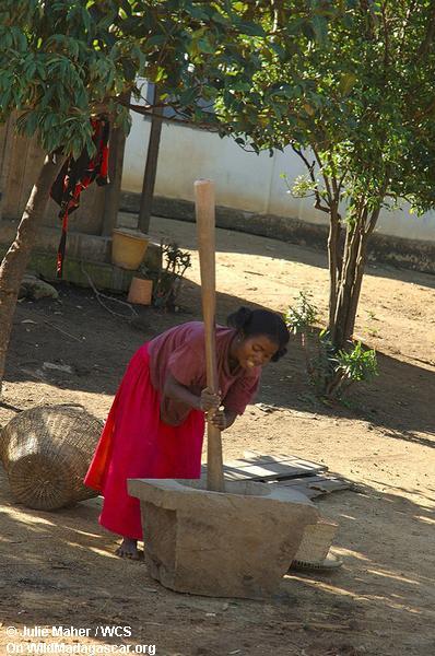 Madagassisches Fraureiben
