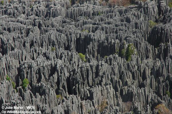 Tsingy de Bemaraha von der Fläche