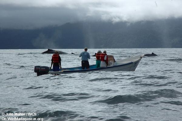 Whalewatching in der Bucht von Antongil