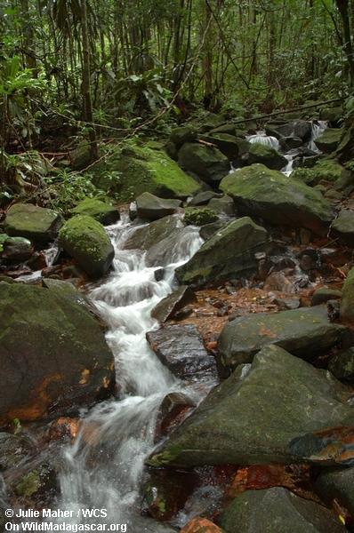 Rainforest Nebenfluß auf der Masoala Halbinsel