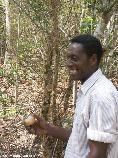Gregoire with tuber (Kirindy)