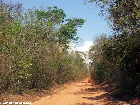 Kirindy road (Kirindy)