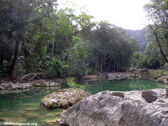 Natural habitat for Aponogeton madagascariensis; Madagascar lace plant (Manambolo)