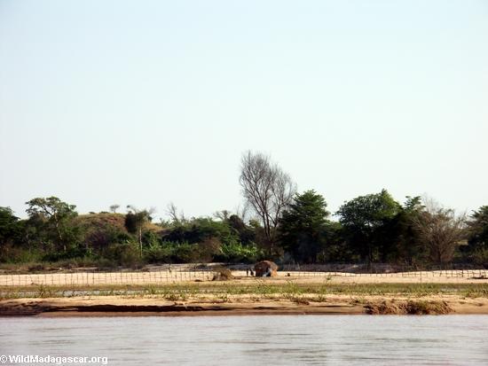 Sakalava hut on sandbar along Manambolo River (Manambolo) [sandbar_hut_2]