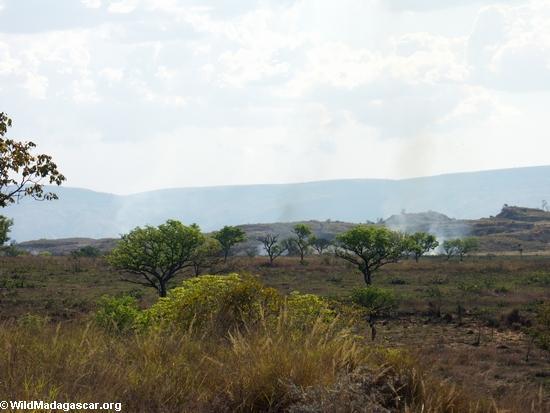 Tavy fire (Manambolo)