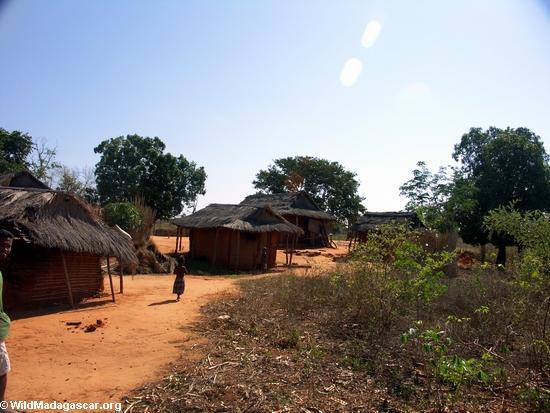 Tsianaloka village (Manambolo)