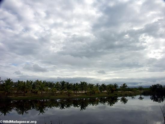 пальмовое облицовка лагуне недалеко Маруанцентре