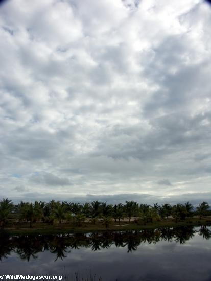 Palmen auf Lagune nahe Maroantsetra