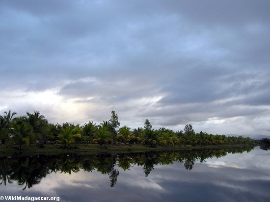 Palm-lined lagoon at sunset near Maroantsetra (Maroantsetra)
