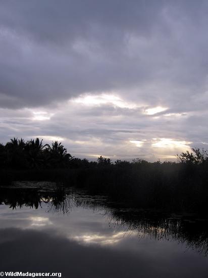 пальмовое облицовка лагуны на закате