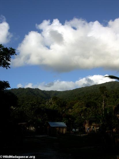Ambodiforaha; Madagascar (Masoala NP)