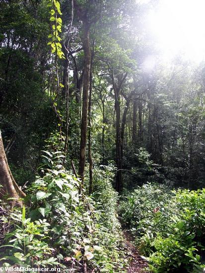 Ecosystems in Madagascar