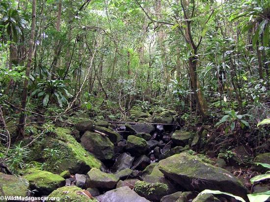 Rainforest creek on the Masoala Peninsula(Masoala NP)
