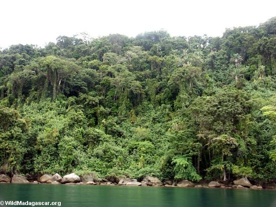 Nosy Mangabe Wald, Ansicht von der Bucht von Antognil