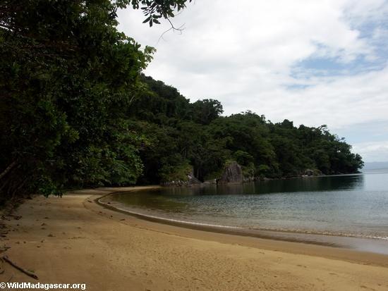 Nosy Mangabe beach in the Bay of Antognil (Nosy Mangabe)