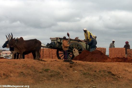 Zebu cart carrying bricks (Tana)