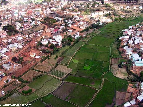 Aerial view of rice paddies in Antananarivo (Flight from Tana West)