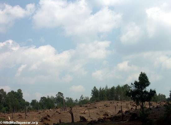 Rice fields of Malagasy highlands (RN7) [tana-rano_0079]