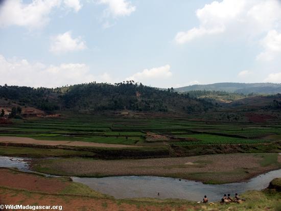 Rice fields of Malagasy highlands (RN7) [tana-rano_0081]