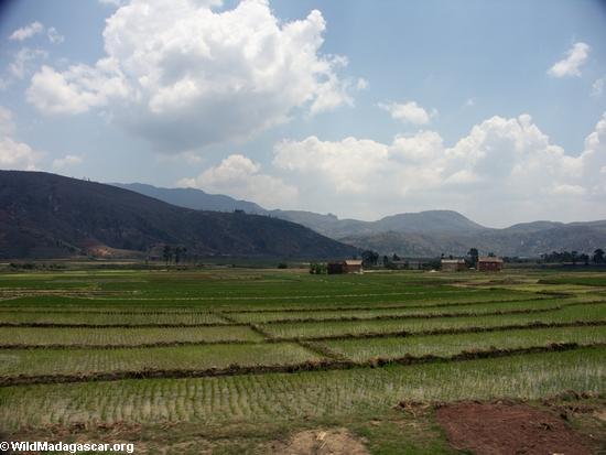 Rice fields of Malagasy highlands (RN7) [tana-rano_0108]