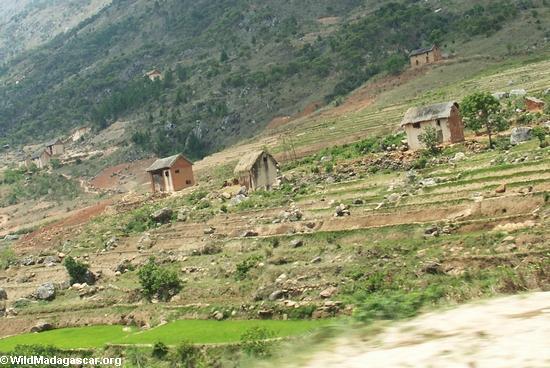 Rice fields of Malagasy highlands (RN7) [tana-rano_0124]