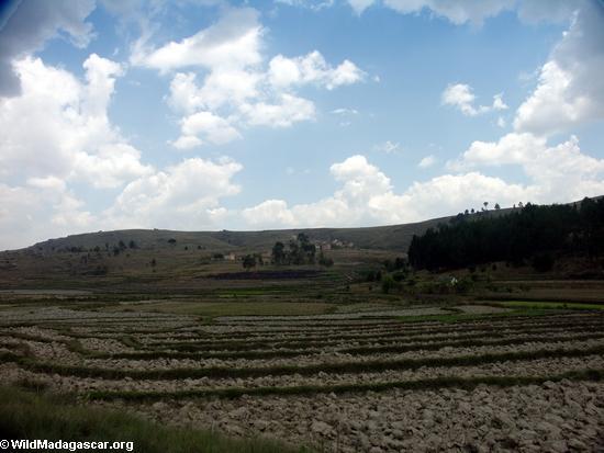 Rice fields of Malagasy highlands (RN7) [tana-rano_0132]